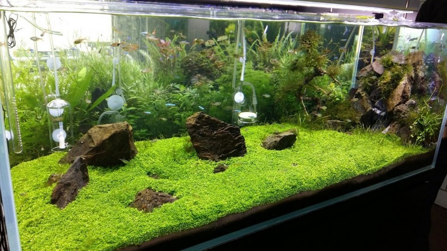 aquascape chicago