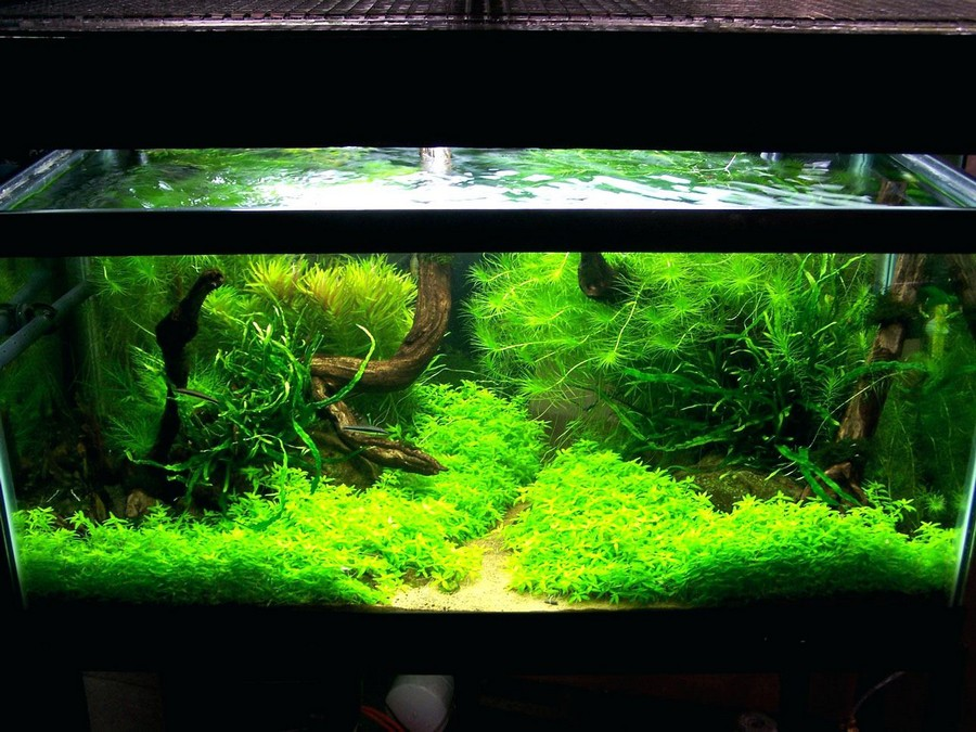 aquascape designs inc