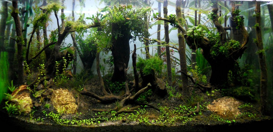aquascape forest