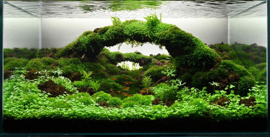 aquascape gallery