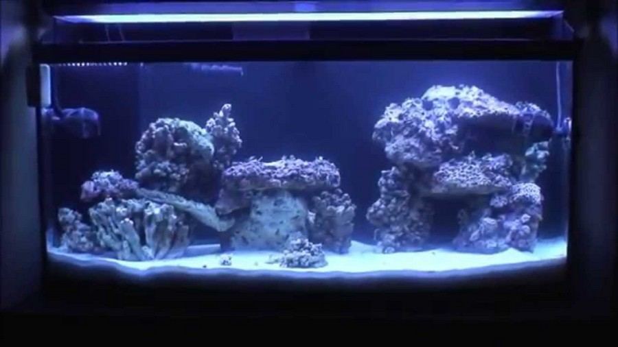 aquascape live rock