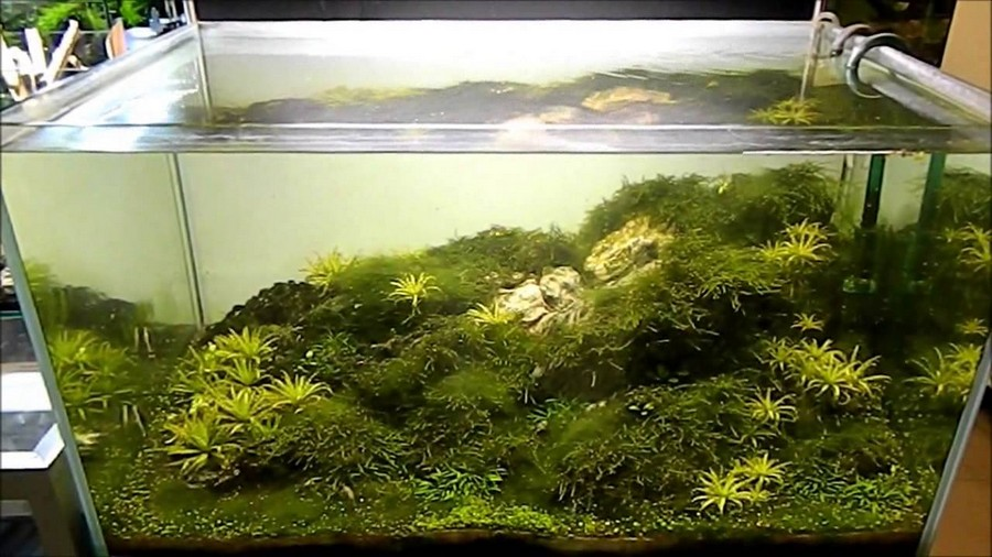 aquascapes hawaii