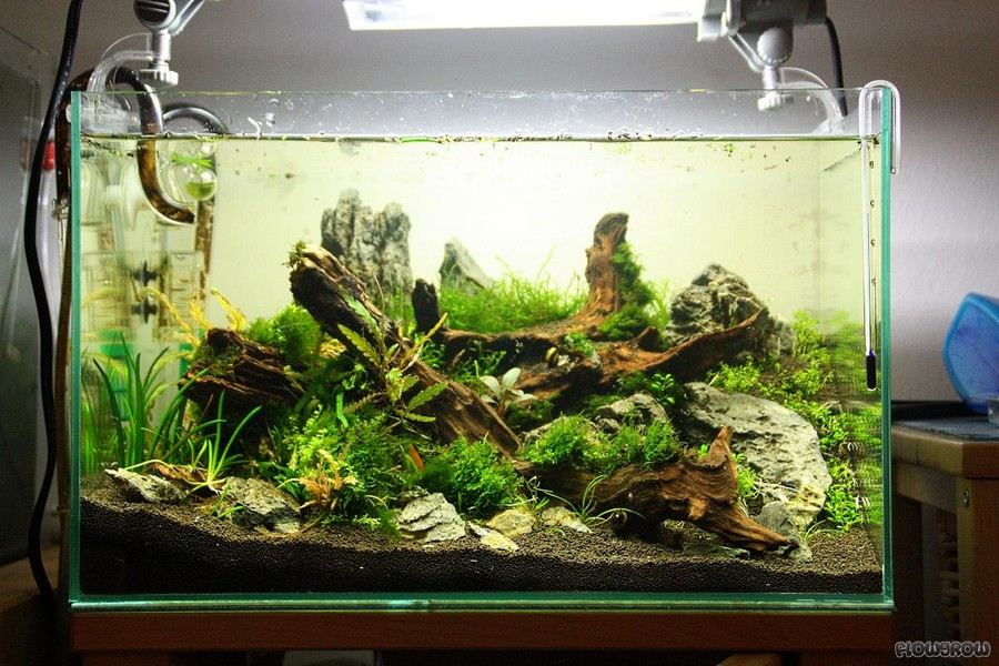 aquascaping forum