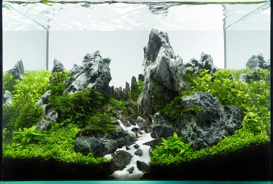 aquascaping layouts