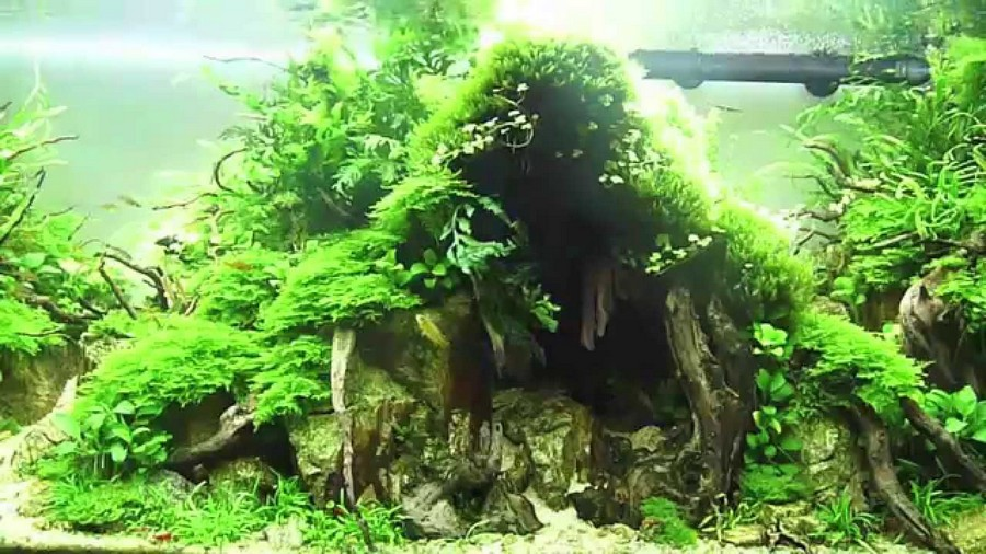 aquascaping techniques