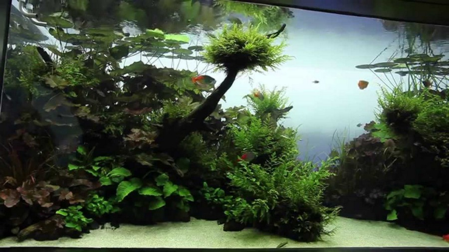 design aquascape