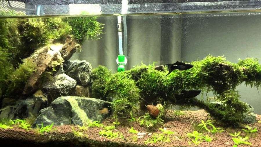 diy aquascape