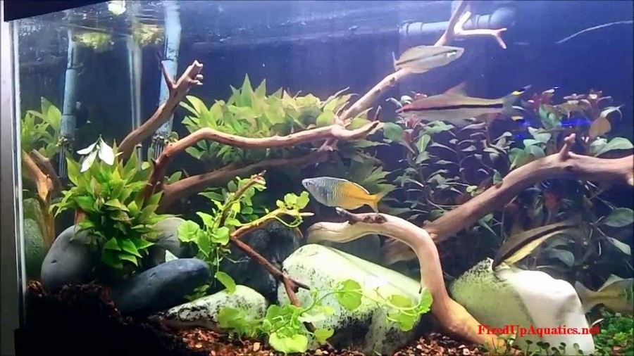 driftwood aquascape