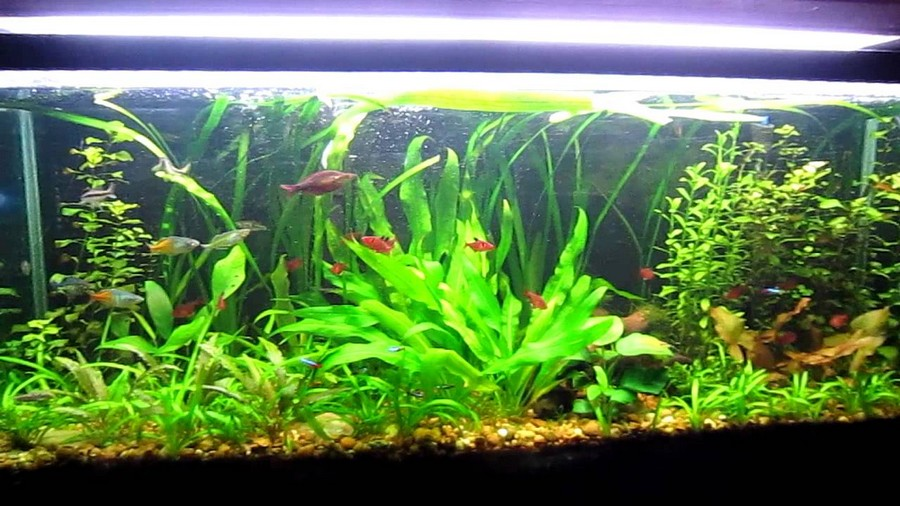 freshwater aquascaping ideas