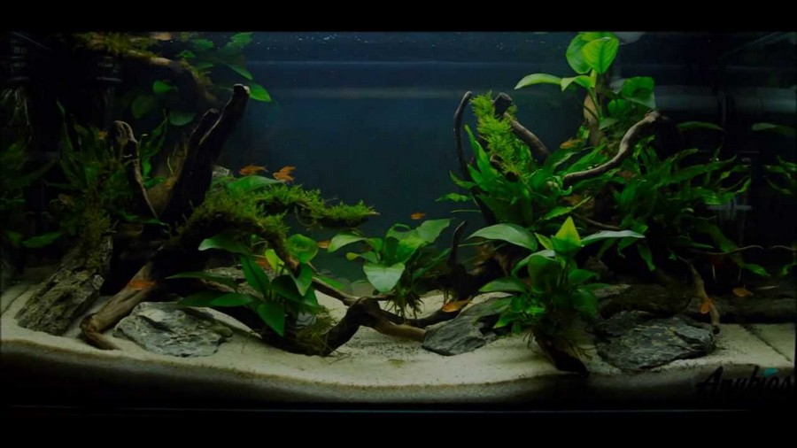 simple aquascaping ideas