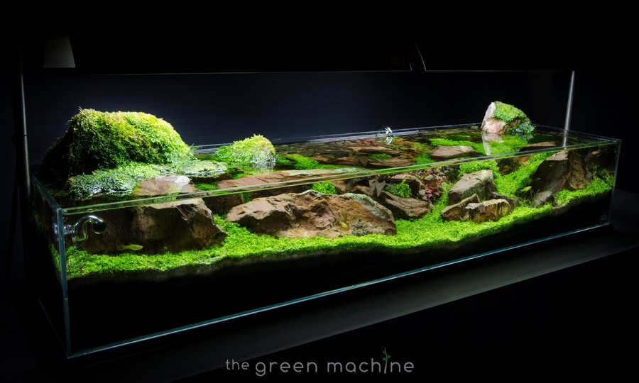 video aquascape