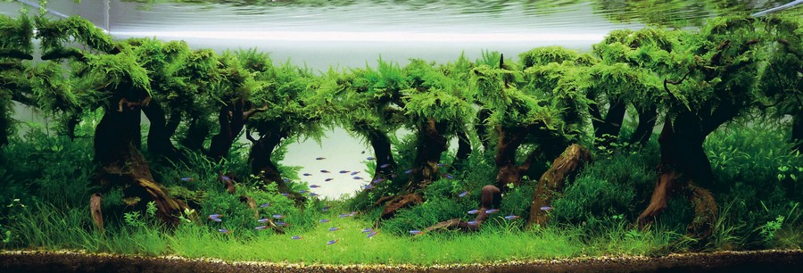 what is aquascaping